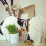 oz + cat grass